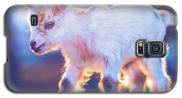 Little Baby Goat Sunset Galaxy S5 Case by TC Morgan