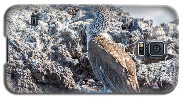 Blue Footed Booby Galaxy S5 Case by Jess Kraft