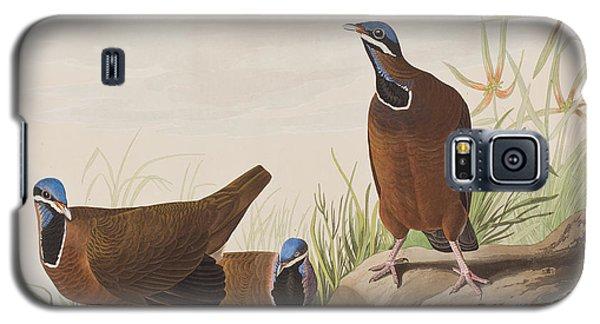 Blue Headed Pigeon Galaxy S5 Case by John James Audubon