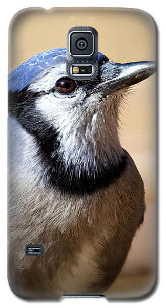 Bird Galaxy S5 Cases - Blue Jay Portrait Galaxy S5 Case by Al  Mueller