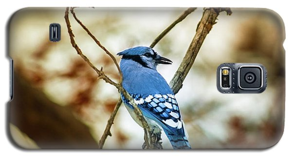 Blue Jay Galaxy S5 Case by Robert Frederick