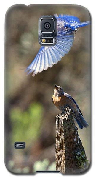 Bluebird Buzz Galaxy S5 Case by Mike Dawson