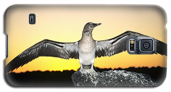 Booby At Sunset Galaxy S5 Case by Dave Fleetham - Printscapes