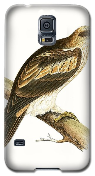 Booted Eagle Galaxy S5 Case by English School