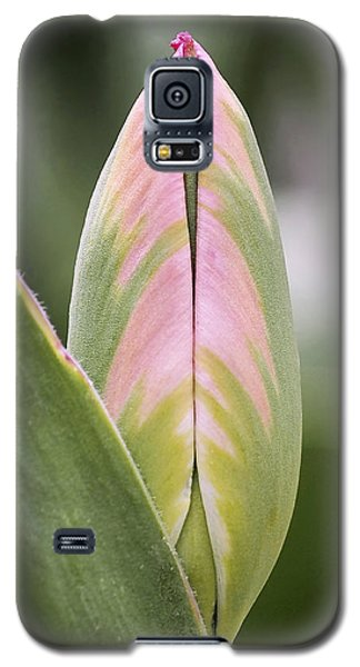 Budding Beauty Galaxy S5 Case by Rona Black