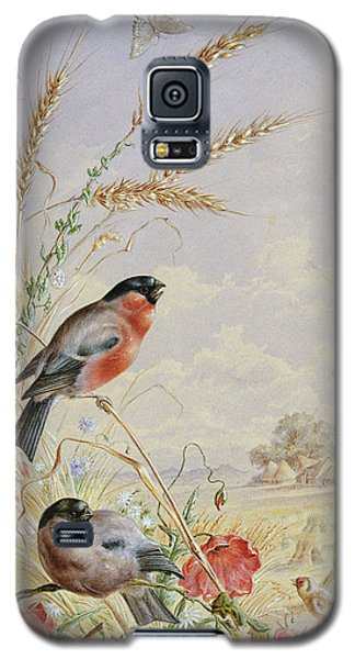 Bullfinches In A Harvest Field Galaxy S5 Case by Harry Bright