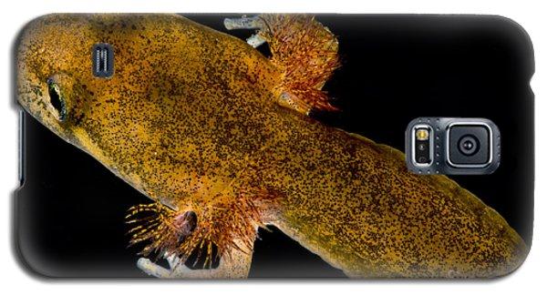 California Giant Salamander Larva Galaxy S5 Case by Dant� Fenolio