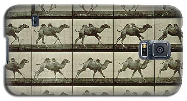 Camel Galaxy S5 Case by Eadweard Muybridge
