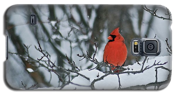 Cardinal And Snow Galaxy S5 Case by Michael Peychich
