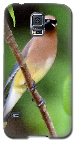 Cedar Wax Wing 2 Galaxy S5 Case by Sheri McLeroy