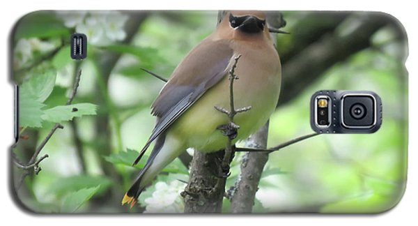 Cedar Wax Wing Galaxy S5 Case by Alison Gimpel