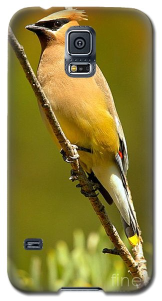 Cedar Waxwing Galaxy S5 Case by Adam Jewell