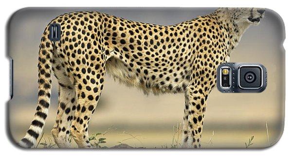 Cheetah Acinonyx Jubatus On Termite Galaxy S5 Case by Winfried Wisniewski