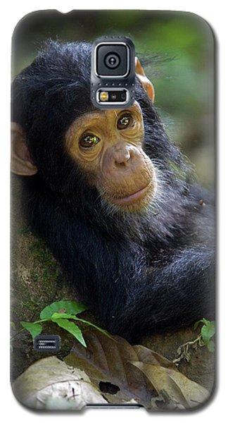 Chimpanzee Pan Troglodytes Baby Leaning Galaxy S5 Case by Ingo Arndt