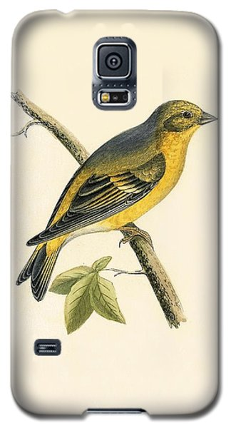 Citril Finch Galaxy S5 Case by English School