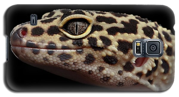 Close-up Leopard Gecko Eublepharis Macularius Isolated On Black Background Galaxy S5 Case by Sergey Taran