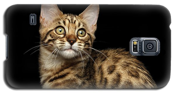 Closeup Bengal Kitty On Isolated Black Background Galaxy S5 Case by Sergey Taran