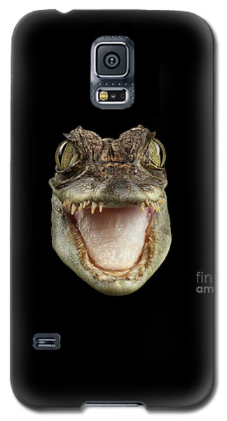 Closeup Head Of Young Cayman Crocodile , Reptile With Opened Mouth Isolated On Black Background, Fro Galaxy S5 Case by Sergey Taran