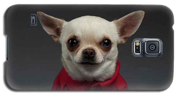 Closeup Portrait Chihuahua Dog In Stylish Clothes. Gray Background Galaxy S5 Case by Sergey Taran