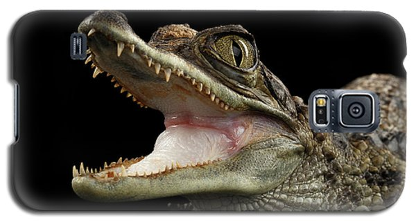 Closeup Young Cayman Crocodile, Reptile With Opened Mouth Isolated On Black Background Galaxy S5 Case by Sergey Taran