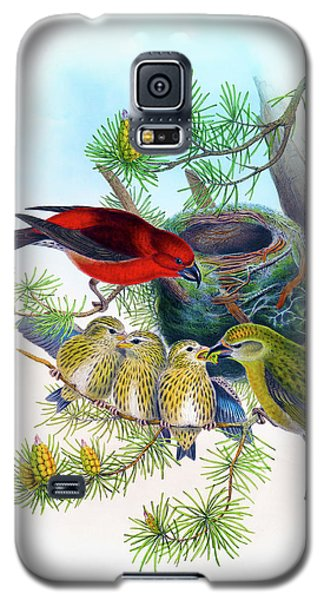 Common Crossbill Antique Bird Print John Gould Hc Richter Birds Of Great Britain  Galaxy S5 Case by Orchard Arts