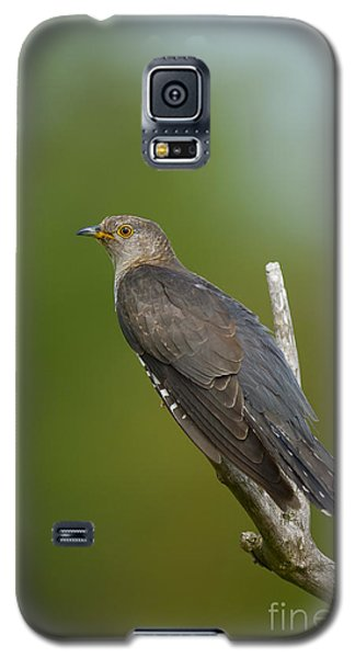 Common Cuckoo Galaxy S5 Case by Steen Drozd Lund