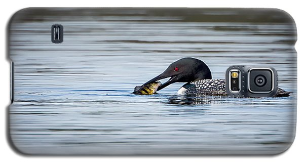 Common Loon Galaxy S5 Case by Bill Wakeley