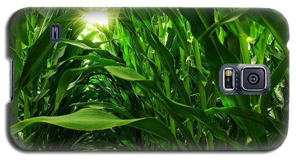 Corn Field Galaxy S5 Case by Carlos Caetano
