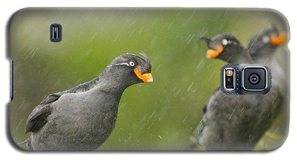 Crested Auklets Galaxy S5 Case by Desmond Dugan/FLPA