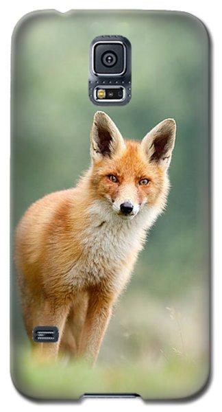 Curious Fox Galaxy S5 Case by Roeselien Raimond