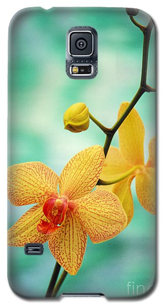 Dendrobium Galaxy S5 Case by Allan Seiden - Printscapes