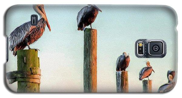 Destin Pelicans-the Peanut Gallery Galaxy S5 Case by JC Findley
