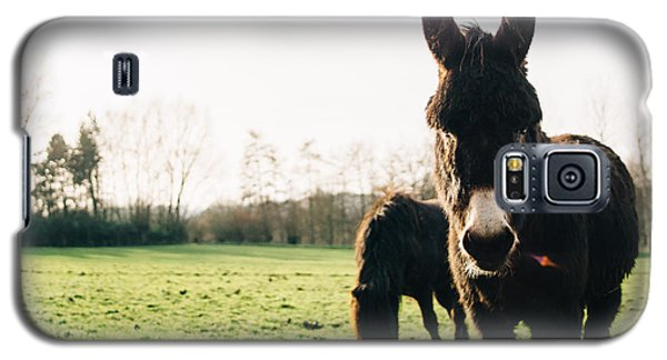 Donkey And Pony Galaxy S5 Case by Pati Photography