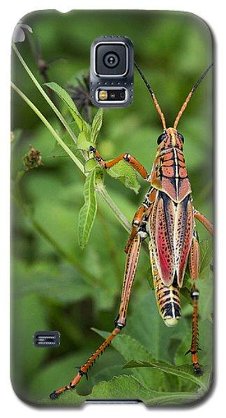 Eastern Lubber Grasshopper  Galaxy S5 Case by Saija  Lehtonen