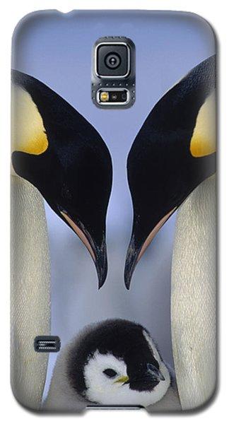 Emperor Penguin Family Galaxy S5 Case by Tui De Roy