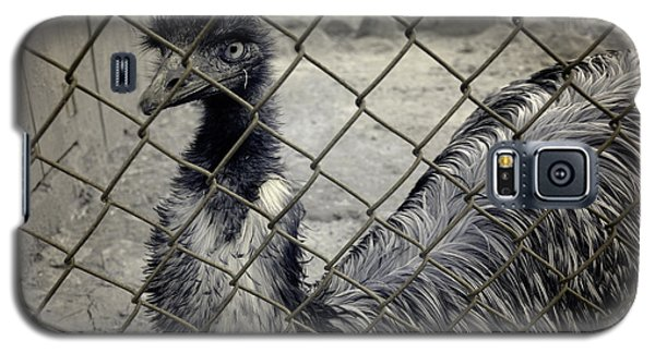 Emu At The Zoo Galaxy S5 Case by Luke Moore