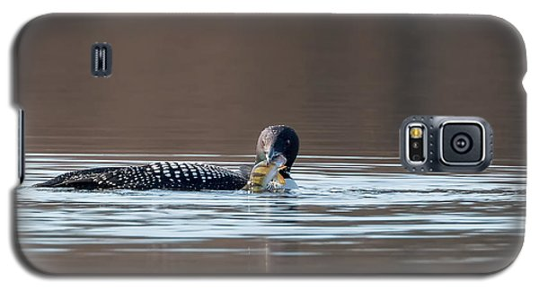 Feeding Common Loon Galaxy S5 Case by Bill Wakeley