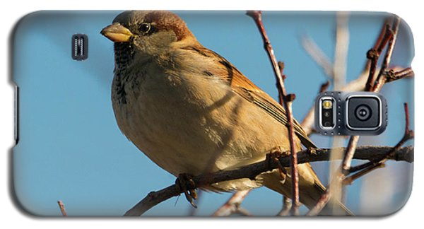 Female House Sparrow Galaxy S5 Case by Mike Dawson