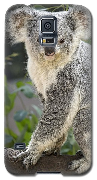 Female Koala Galaxy S5 Case by Jamie Pham