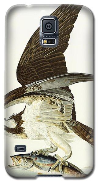 Fish Hawk Galaxy S5 Case by John James Audubon