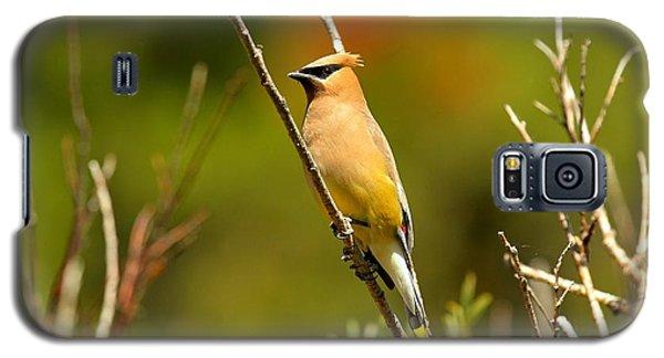 Fishercap Cedar Waxwing Galaxy S5 Case by Adam Jewell
