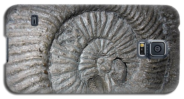 Fossil Spiral  Galaxy S5 Case by LeeAnn McLaneGoetz McLaneGoetzStudioLLCcom
