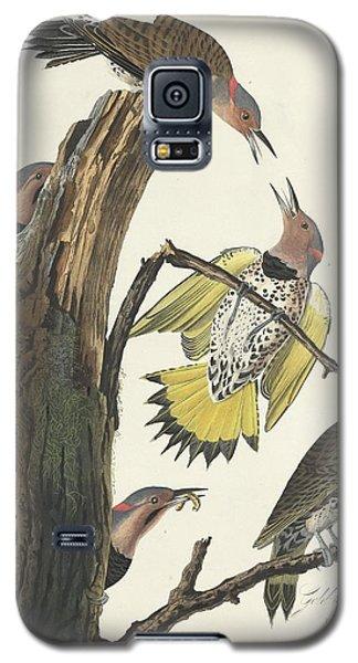 Gold-winged Woodpecker Galaxy S5 Case by John James Audubon