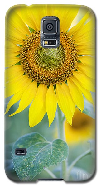 Golden Sunflower Galaxy S5 Case by Tim Gainey