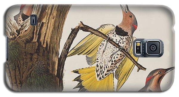 Golden-winged Woodpecker Galaxy S5 Case by John James Audubon