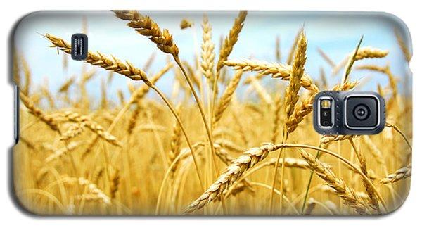 Grain Field Galaxy S5 Case by Elena Elisseeva