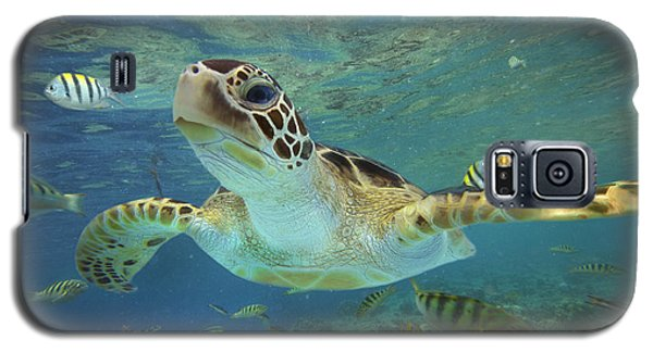 Green Sea Turtle Chelonia Mydas Galaxy S5 Case by Tim Fitzharris