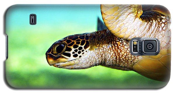 Animals Galaxy S5 Cases - Green Sea Turtle Galaxy S5 Case by Marilyn Hunt