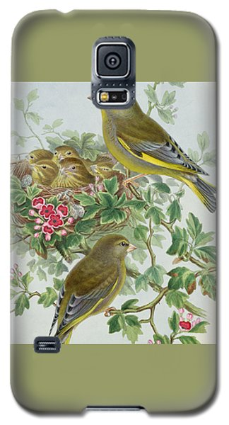 Greenfinch Galaxy S5 Case by John Gould