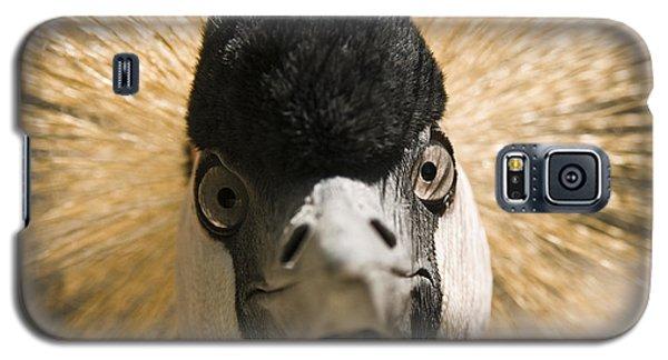Grey Crowned Crane Galaxy S5 Case by Chad Davis